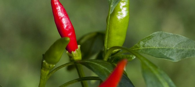 Eat Chile Peppers For Spice And Nutrition