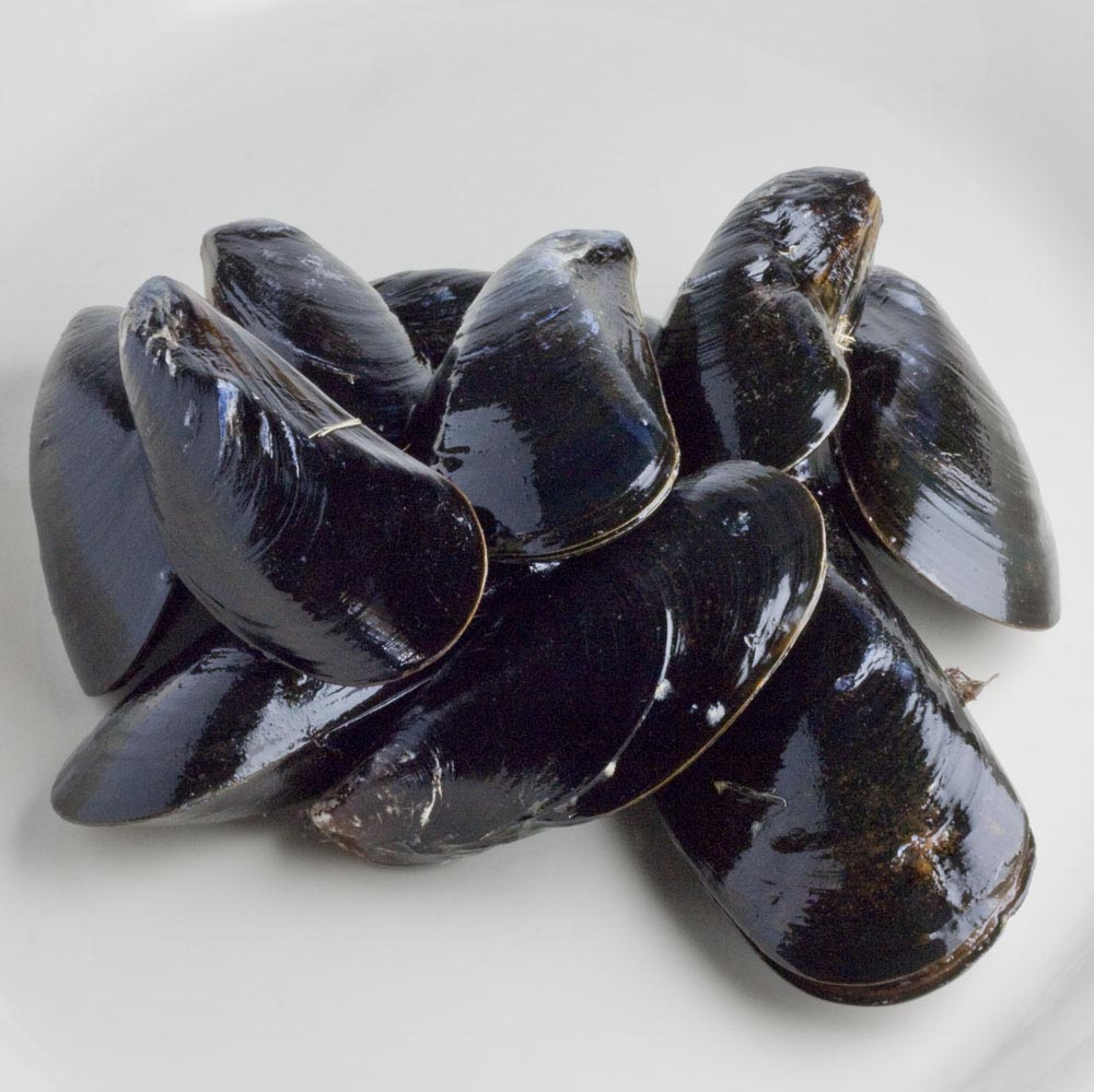 Shellfish supply easily digested complete protein and many other important nutrients.