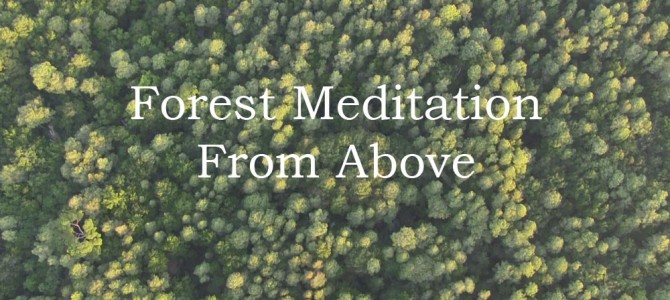 Forest Meditation From Above