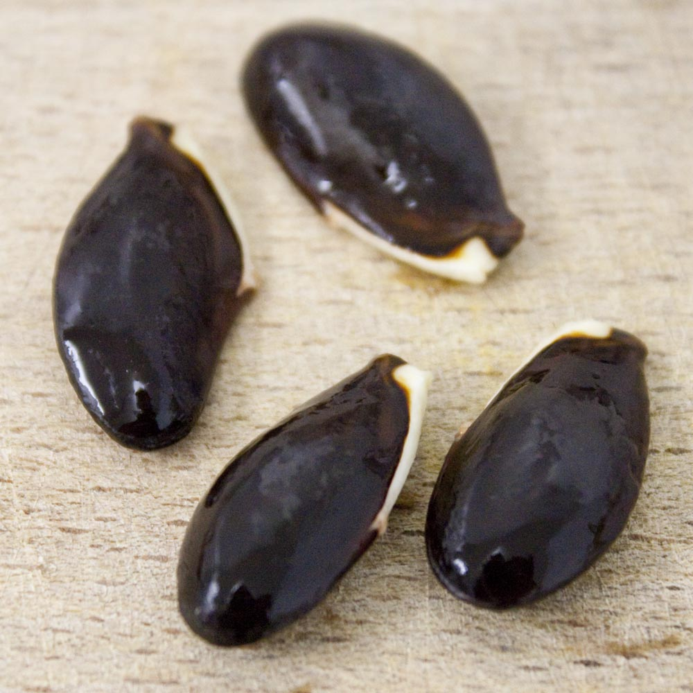 dilly fruit seeds